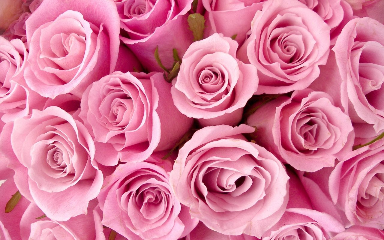 Dưỡng trắng da tuyệt vời với mặt nạ hoa hồng theo cách ở spa